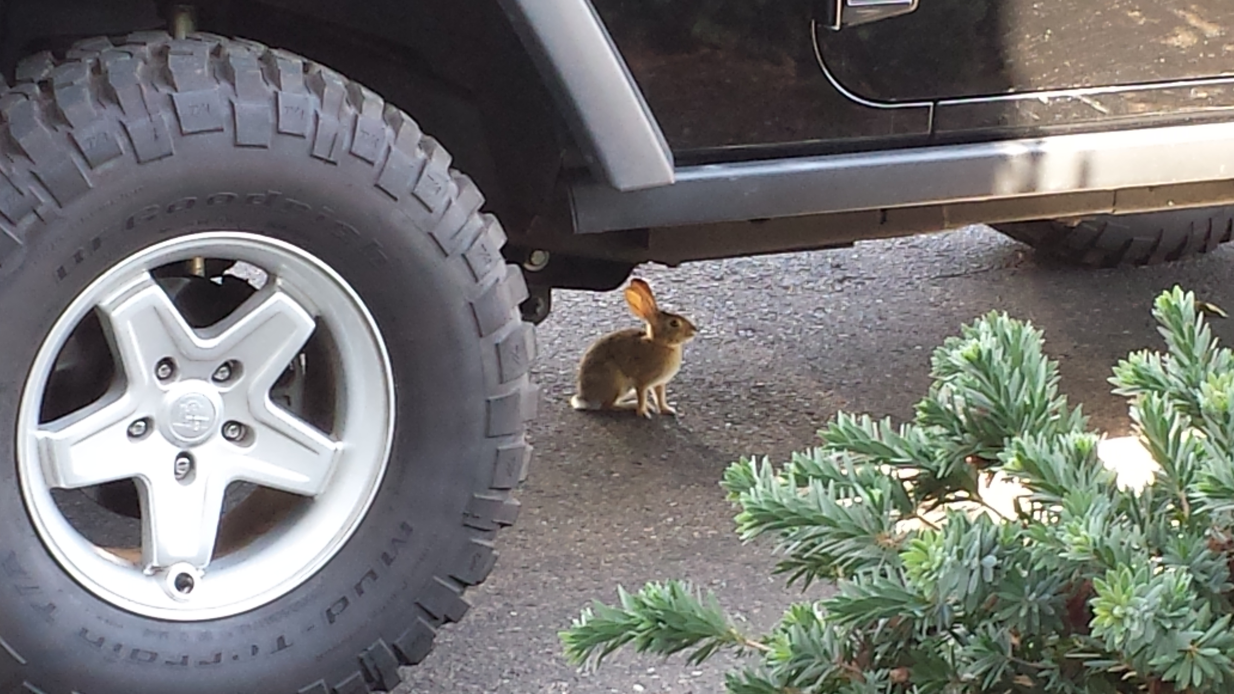 A new acquaintance takes a respite in the shade and safety of my Jeep.